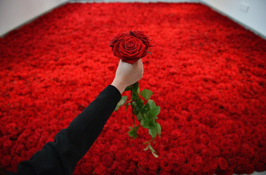 1000000 roses#514
