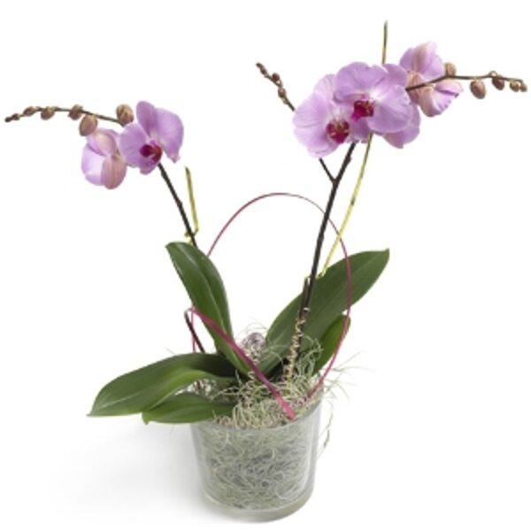 Орхидея в горшке #303