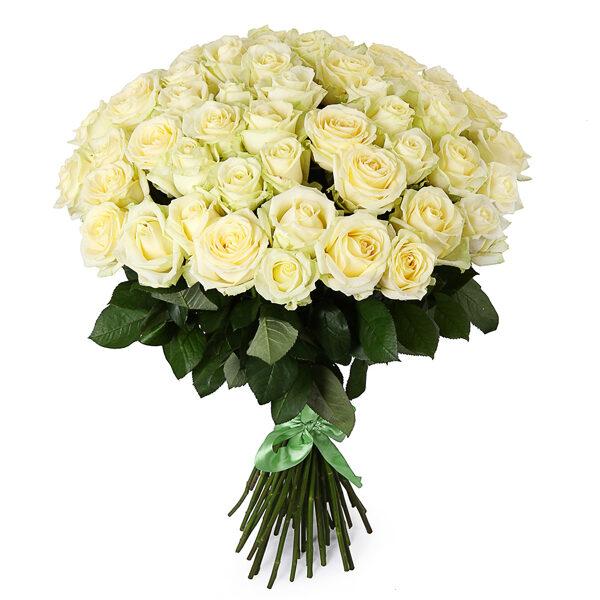 51 white roses #504